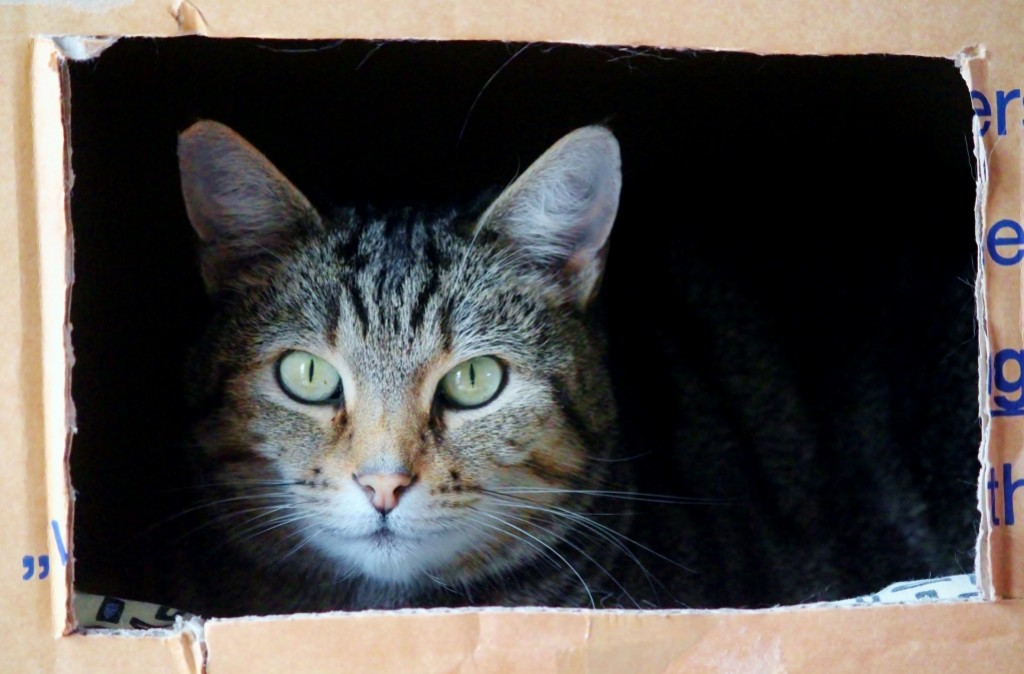 Cats and moving : how to be correctly prepared ?