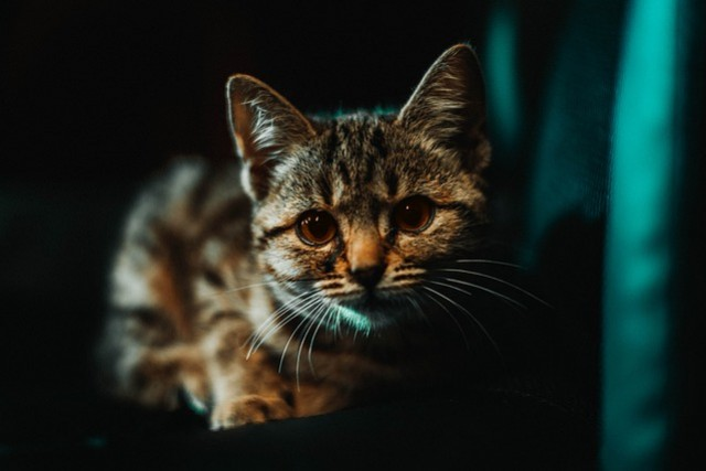Taking the plane with your cat : our advices
