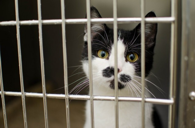 Adopting an abandoned cat : our tips