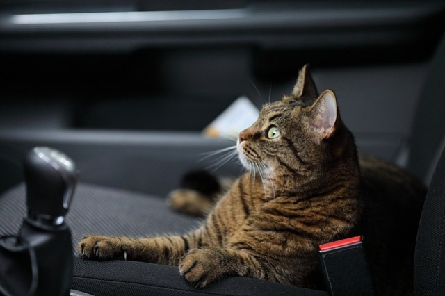 How to choose the perfect cat carrier ?