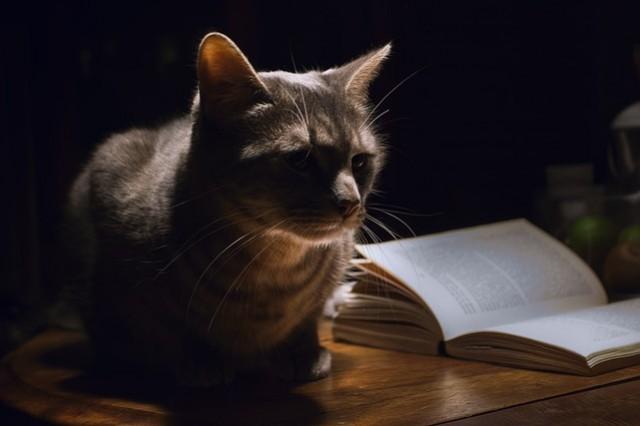 Au secours : mon chat ne dort pas la nuit