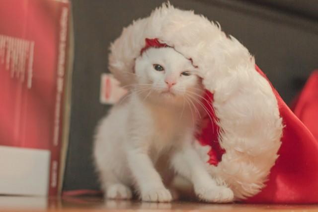 Diy un calendrier de l avent pour votre chat - Calendrier de l avent vide ...