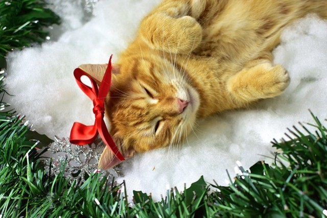 Christmas is coming : our wishlist for cat lovers