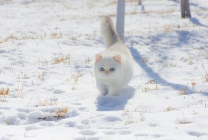 A cat in winter: how to protect your cat from the cold ?