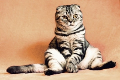 #Instacats : our favourite accounts