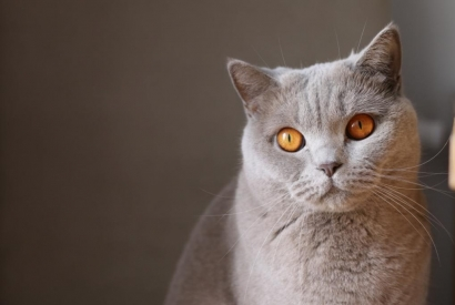 Food : are cats (too) demanding ?