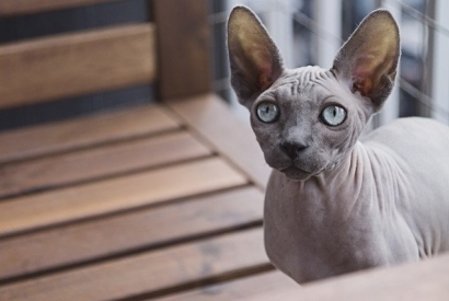 Having a cat when you are allergic : our tips