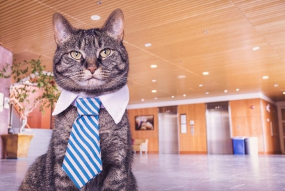 Which jobs can you find to work with cats ?