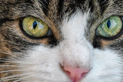 The cat : an animal that is good to our health !
