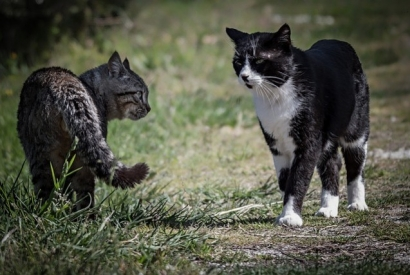 Cat Fights : how to Protect Your Cat ?