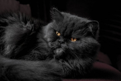 Which cat breed is right for you ?