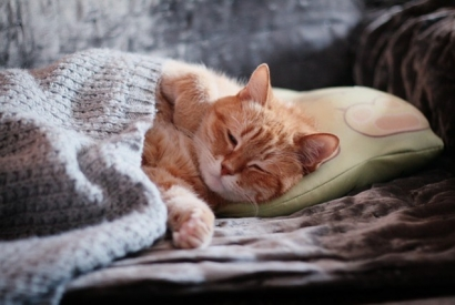 5 things your cat can do better than you