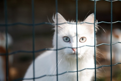 Adopting a cat from a shelter: what you need to know
