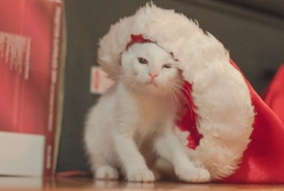 DIY: create an Advent calendar for your cat