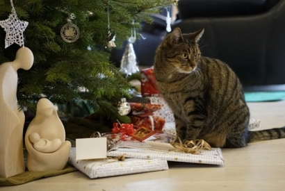 5 ways to spoil your cat this Christmas