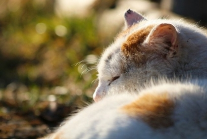 What to do if your cat has indigestion