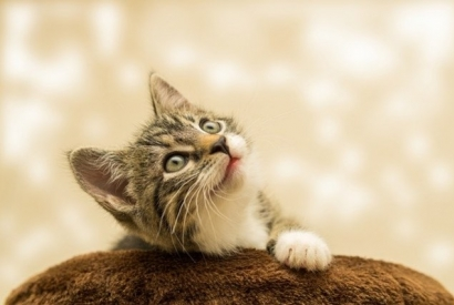 Health tips to keep your cat healthy